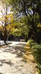 菊池隆志 公式ブログ/『銀杏が鮮やかに♪o(^-^)o 』 画像1
