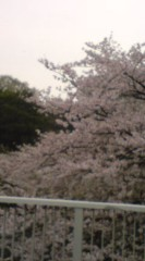 菊池隆志 公式ブログ/『ロケ場所の桜♪o(^-^)o 』 画像1