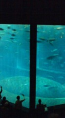 菊池隆志 公式ブログ/『サメ、イワシ、マグロ』 画像3