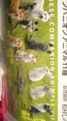 菊池隆志 公式ブログ/『犬、猫、兎、亀♪o(^-^)o 』 画像2