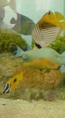 菊池隆志 公式ブログ/『銀座で美ら海水族館♪』 画像2
