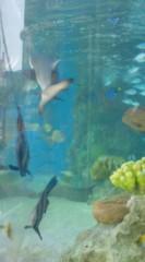 菊池隆志 公式ブログ/『簡易水族館♪o(^-^)o 』 画像3