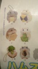 菊池隆志 公式ブログ/『ハムスター♪o(^-^)o 』 画像2
