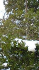菊池隆志 公式ブログ/『雪だぁ♪o(^-^)o 』 画像2