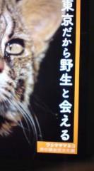 菊池隆志 公式ブログ/『ツシマヤマネコo(^-^)o 』 画像2