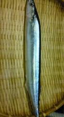菊池隆志 公式ブログ/『秋刀魚(  ̄▽ ̄)』 画像1