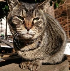 菊池隆志 公式ブログ/『ふにふにキジトラさん♪(^○^)』 画像1