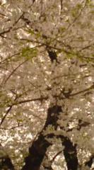 菊池隆志 公式ブログ/『桜♪o(^-^)o 』 画像2