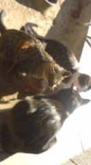 菊池隆志 公式ブログ/『猫会議!?o(^-^)o 』 画像3