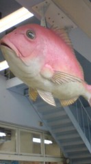 菊池隆志 公式ブログ/『鯛!?o(^-^)o 』 画像1