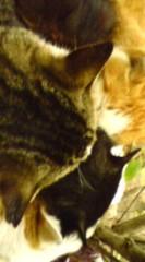 菊池隆志 公式ブログ/『団結猫♪o(^-^)o 』 画像1