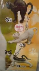 菊池隆志 公式ブログ/『ひだまりの伸び猫ストラップ♪』 画像3