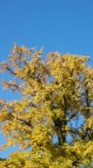 菊池隆志 公式ブログ/『青空&銀杏の木』 画像1