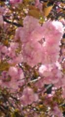 菊池隆志 公式ブログ/『豊川稲荷と桜♪o(^-^)o 』 画像2