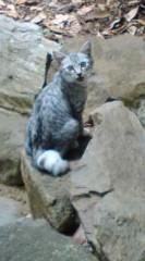 菊池隆志 公式ブログ/『神社猫!?o(^-^)o 』 画像3