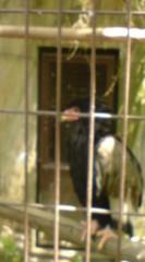 菊池隆志 公式ブログ/『猛禽類♪o(^-^)o 』 画像3