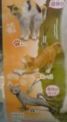 菊池隆志 公式ブログ/『ひだまりの伸び猫ストラップ♪』 画像2