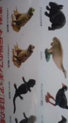 菊池隆志 公式ブログ/『沖縄奄美の動物フィギュア♪』 画像2