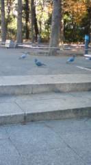 菊池隆志 公式ブログ/『鳩好き!?( ゜_゜) 』 画像2