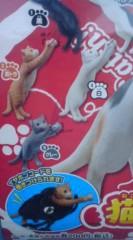 菊池隆志 公式ブログ/『猫キャッチ♪(  ̄▽ ̄)』 画像2