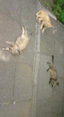 菊池隆志 公式ブログ/『猫談義♪o(^-^)o 』 画像1