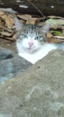 菊池隆志 公式ブログ/『神社猫!?o(^-^)o 』 画像1