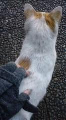 菊池隆志 公式ブログ/『猫パンチ!?o(^-^)o 』 画像1