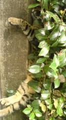 菊池隆志 公式ブログ/『木陰でグウスカピィ♪』 画像1