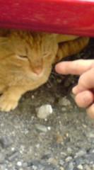菊池隆志 公式ブログ/『駐車場ネコ♪o(^-^)o 』 画像3