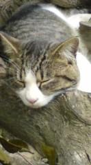 菊池隆志 公式ブログ/『木枕!?(゜ _゜)』 画像2