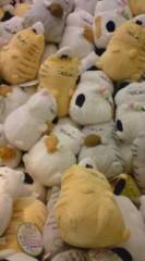 菊池隆志 公式ブログ/『でぶ猫集団(  ̄▽ ̄)』 画像1
