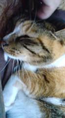 菊池隆志 公式ブログ/『三匹で寝る♪o(^-^)o 』 画像3