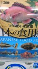 菊池隆志 公式ブログ/『日本の魚♪o(^-^)o 』 画像1