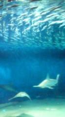 菊池隆志 公式ブログ/『サメ、イワシ、マグロ』 画像2