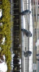 菊池隆志 公式ブログ/『ずんぐりむっくり♪o(^-^)o 』 画像1