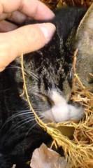 菊池隆志 公式ブログ/『杉の葉ベッドに包まれて♪』 画像3