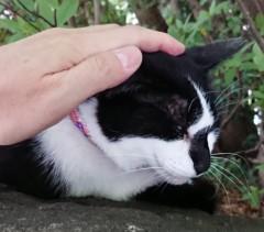 菊池隆志 公式ブログ/『手ぶらとわかれば( ̄▽ ̄;)』 画像2