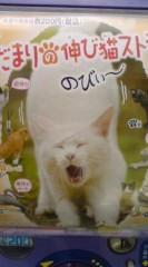 菊池隆志 公式ブログ/『ひだまりの伸び猫ストラップ♪』 画像1