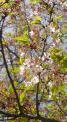 菊池隆志 公式ブログ/『葉桜♪o(^-^)o 』 画像2