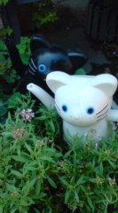 菊池隆志 公式ブログ/『猫多重影分身!?o(^-^)o 』 画像3