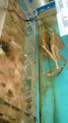 菊池隆志 公式ブログ/『蟹・カニ・KANI ♪o(^-^)o 』 画像2