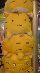 菊池隆志 公式ブログ/『猫団子!?o(^-^)o 』 画像1
