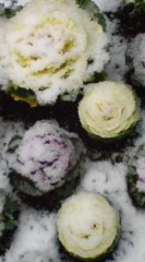 菊池隆志 公式ブログ/『おはようございますo(^-^)o 』 画像3
