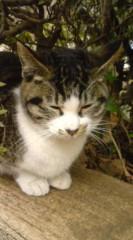 菊池隆志 公式ブログ/『眠り猫o(^-^)o 』 画像3