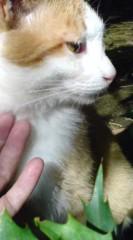 菊池隆志 公式ブログ/『気になる?o(^-^)o 』 画像3