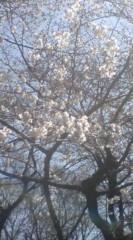 菊池隆志 公式ブログ/『まだ咲いてなくてもo(^-^)o 』 画像2