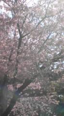 菊池隆志 公式ブログ/『何桜かなぁo(^-^)o 』 画像1