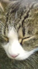 菊池隆志 公式ブログ/『木枕!?(゜ _゜)』 画像1