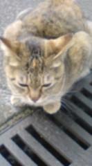 菊池隆志 公式ブログ/『スタスタo(^-^)o 』 画像1
