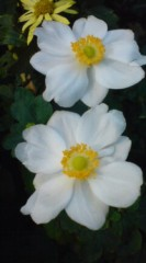 菊池隆志 公式ブログ/おはようございますo(^-^)o 画像1
